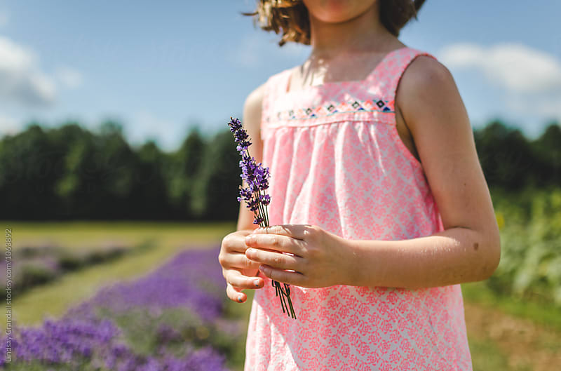 Young child holding a sprig of lavender in a field by Lindsay Crandall for Stocksy United