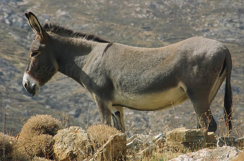 Donkey by Jelena Jojic Tomic for Stocksy United