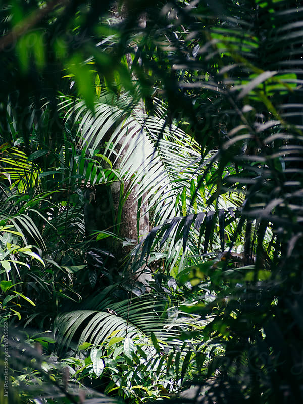 Rainforest in Cairns, Australia by Juri Pozzi for Stocksy United
