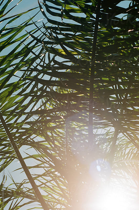 Palm tree summer sun flare by Douglas Robichaud for Stocksy United