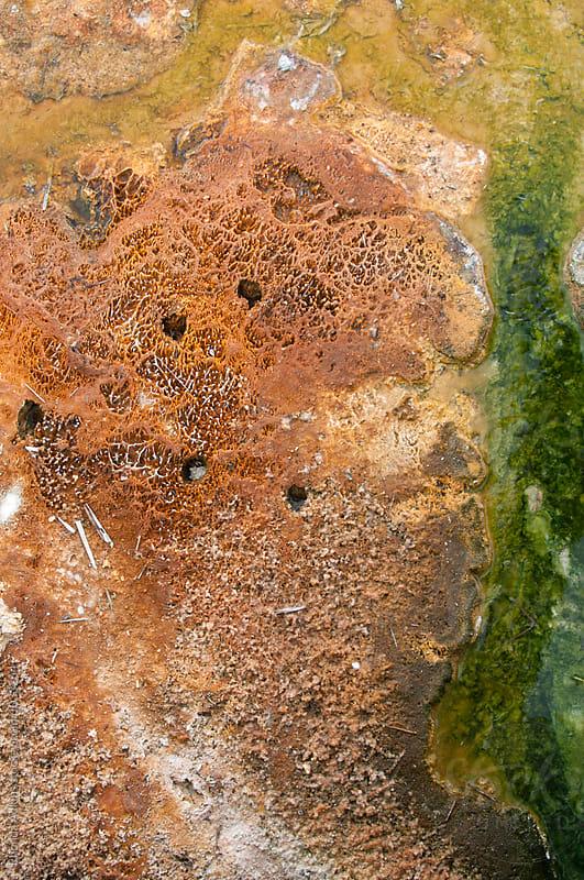 red and green algae growth by Rhonda Adkins for Stocksy United
