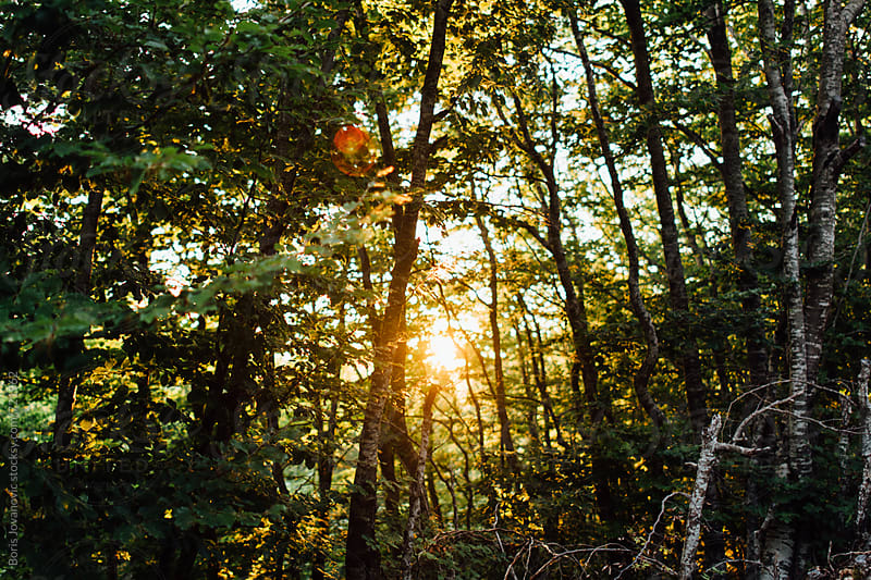 Beautiful sunset through the forest by Boris Jovanovic for Stocksy United