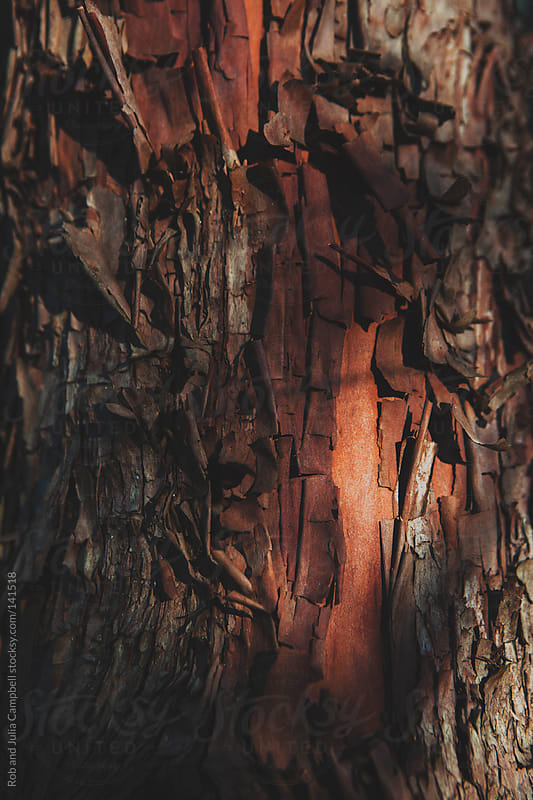 Close-up macro of arbutus tree trunk and pealing bark by Rob and Julia Campbell for Stocksy United