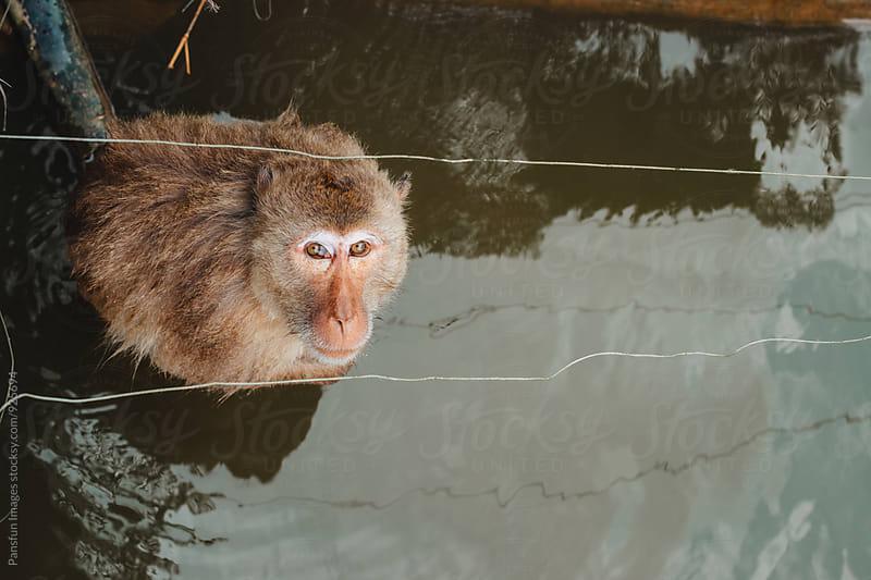 animal monkey by Xunbin Pan for Stocksy United