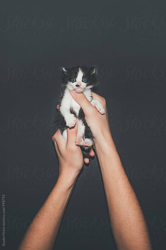 Three weeks old Kitten  by Studio Firma for Stocksy United