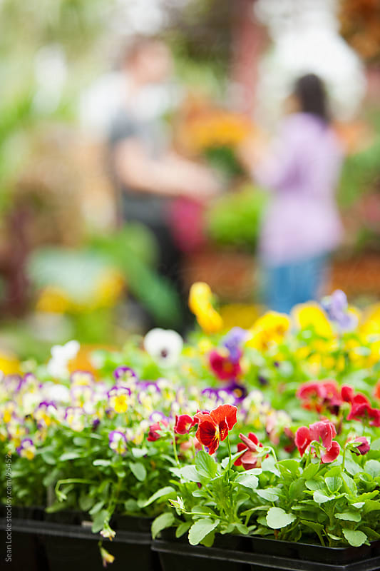 Market: Flat of Pansies with Couple in Background by Sean Locke for Stocksy United