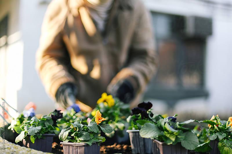 Pots with flowers by Marija Kovac for Stocksy United