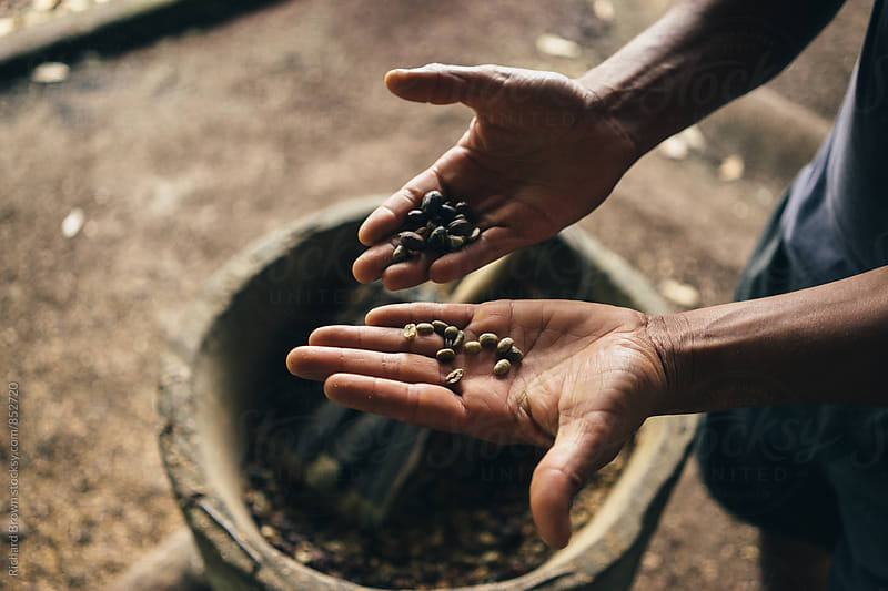 Hulling Coffee Beans by Richard Brown for Stocksy United