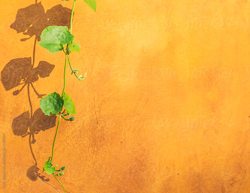 Green leafy plant on orange wall by Jovo Jovanovic for Stocksy United