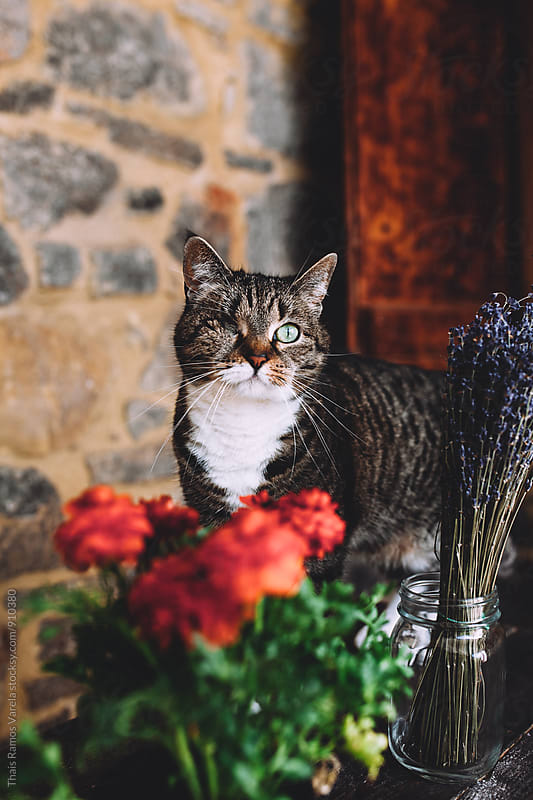cat between flowers by Thais Ramos Varela for Stocksy United