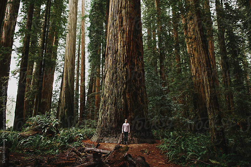 Smal man big tree by Dylan M Howell Photography for Stocksy United