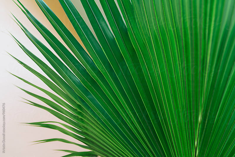 Cropped palm leaf by Kristin Duvall for Stocksy United