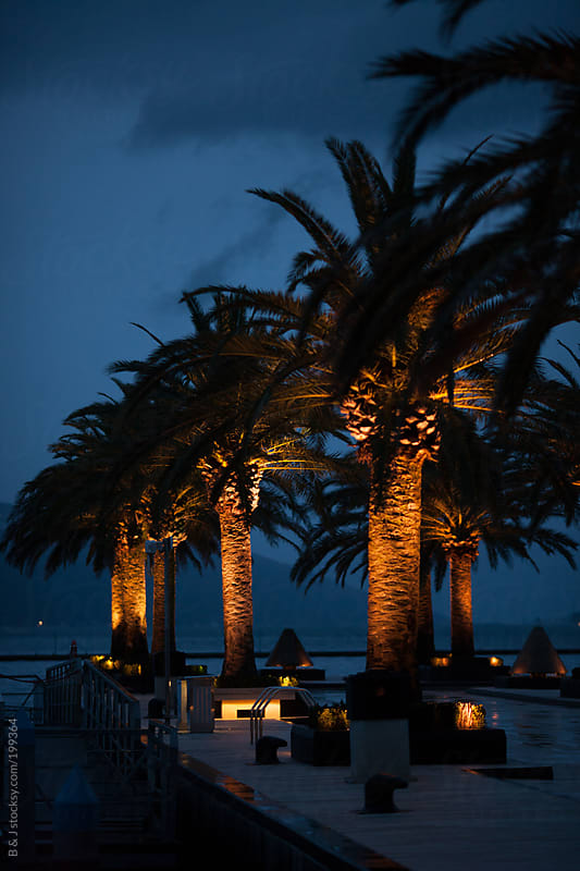 Marina with palm trees by night by B & J for Stocksy United