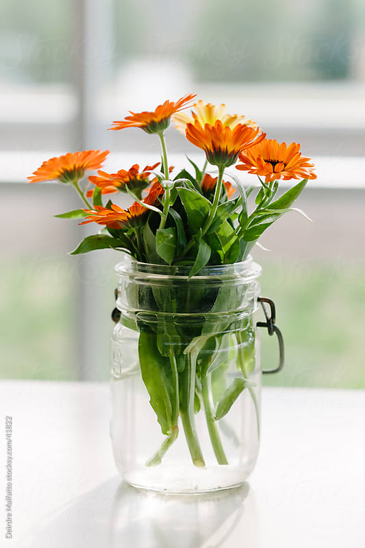 Orange calendula flowers in a glass jar by Deirdre Malfatto for Stocksy United