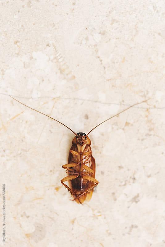 Dead cockroach by Luca Pierro for Stocksy United