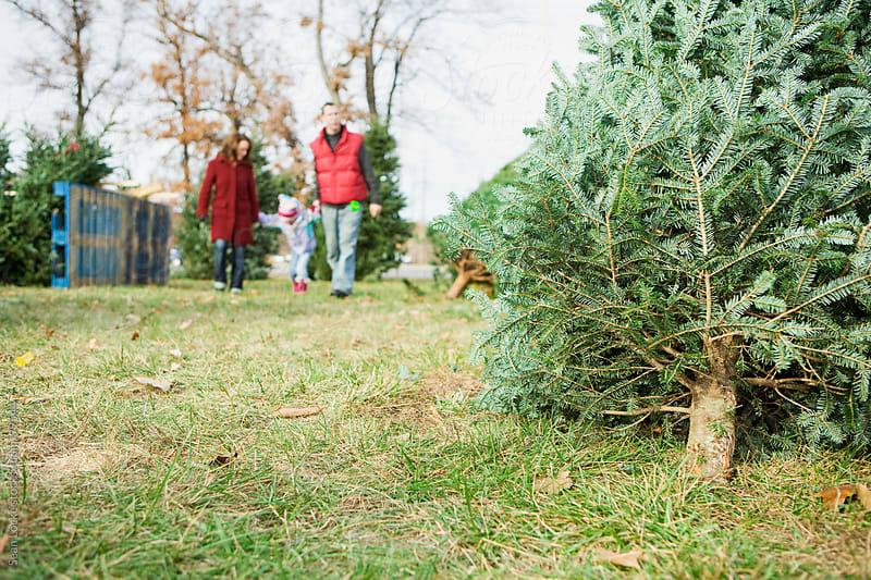 Tree Lot: Family Shopping For A Christmas Tree by Sean Locke for Stocksy United
