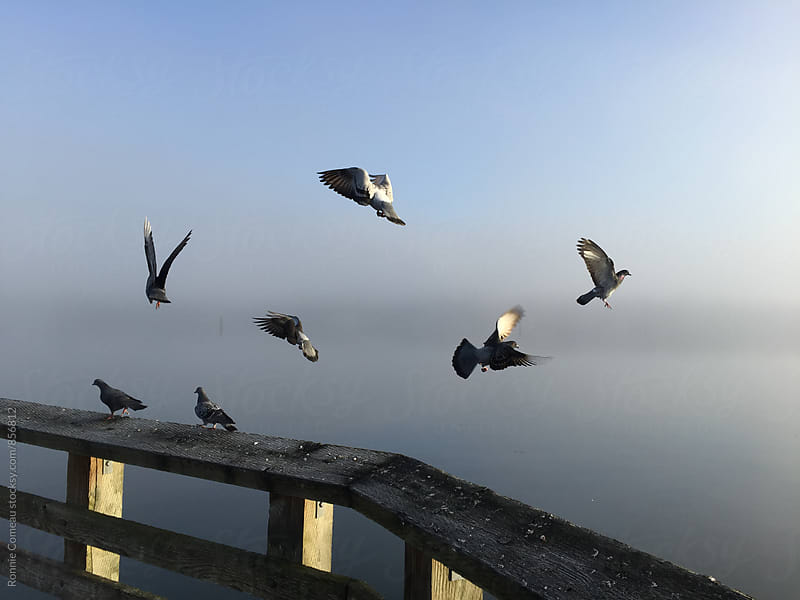 Birds In Flight On Foggy Morning by Ronnie Comeau for Stocksy United