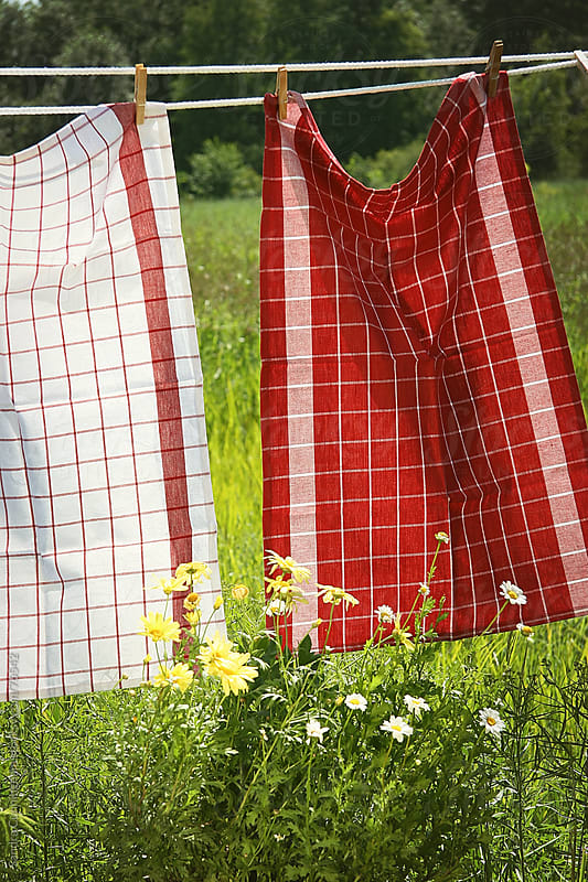 Dish towels drying outside on a summer day by Sandra Cunningham for Stocksy United