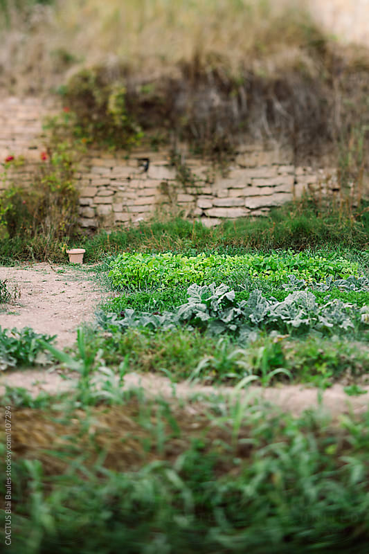 Garden in autumn by CACTUS Blai Baules for Stocksy United