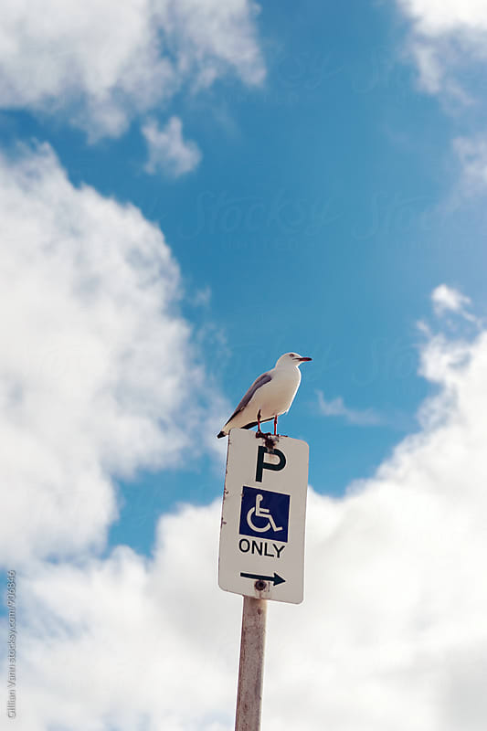 seagull on no standing sign by Gillian Vann for Stocksy United