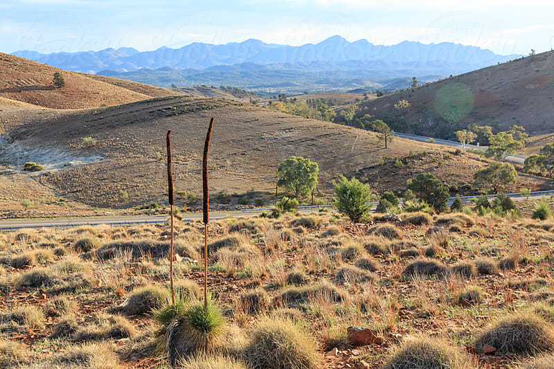 Wilpena Pounds. Australia. by John White for Stocksy United