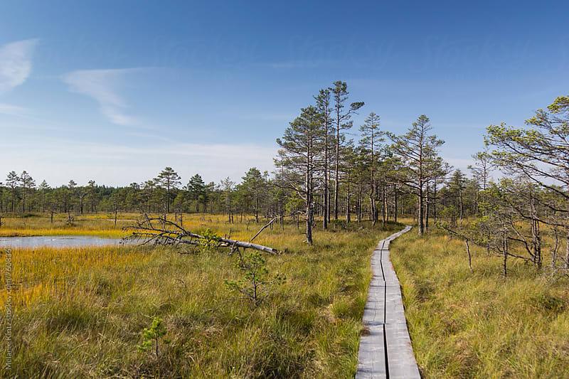 Wooden path through the Viru Raba bog, Lahemaa National Park, Estonia by Melanie Kintz for Stocksy United