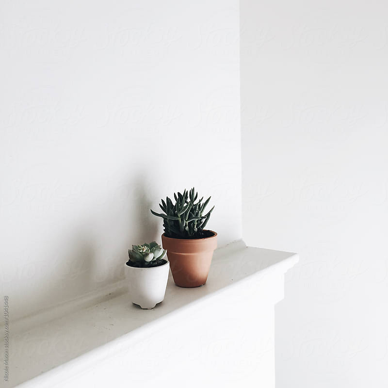 potted plants on a white shelf in white room by Nicole Mason for Stocksy United