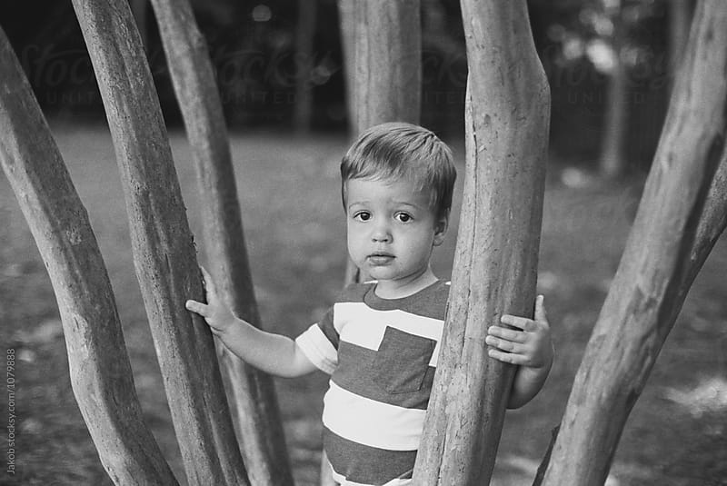 Cute young boy playing in a tree by Jakob for Stocksy United