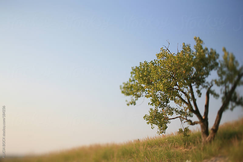 Trees Growing In The Sand Dune by ALICIA BOCK for Stocksy United