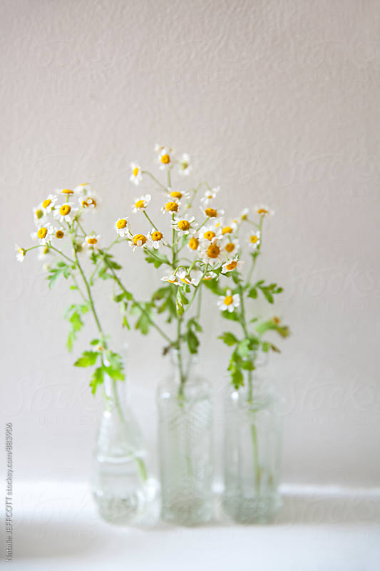 Three cute glass bottles with seaside daisy flowers by Natalie JEFFCOTT for Stocksy United