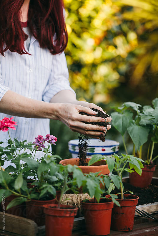 Woman planting spring flowers into terracotta pots. by kkgas for Stocksy United