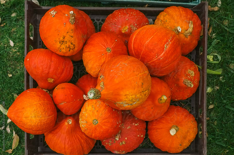 Organic French Pumpkins for sale at a market by Rowena Naylor for Stocksy United