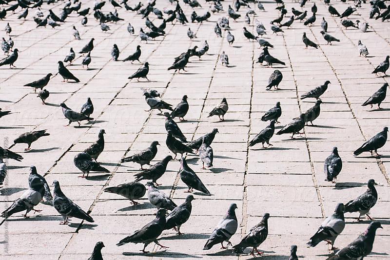Pigeons by Alejandro Moreno de Carlos for Stocksy United