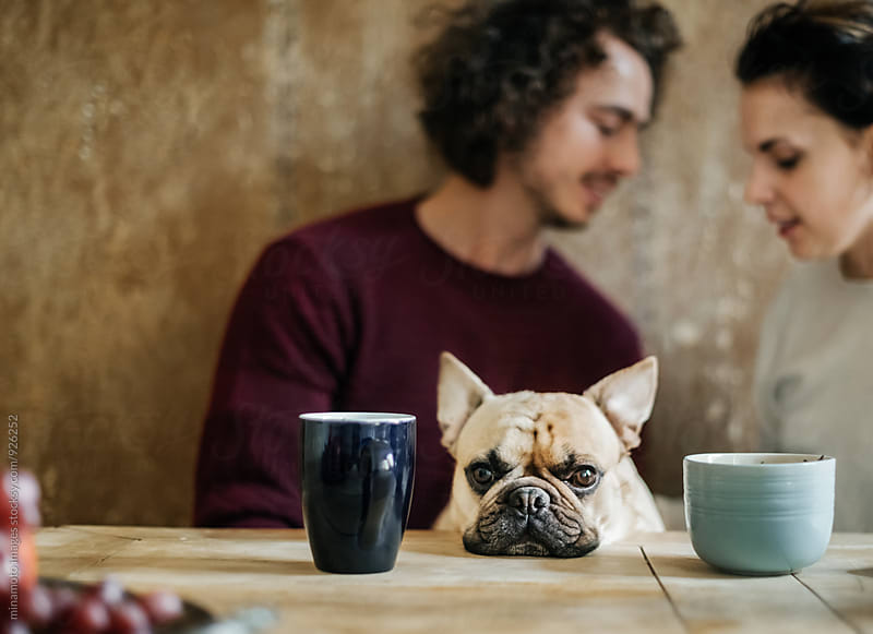 Small dog with a couple at a wooden table. by minamoto images for Stocksy United