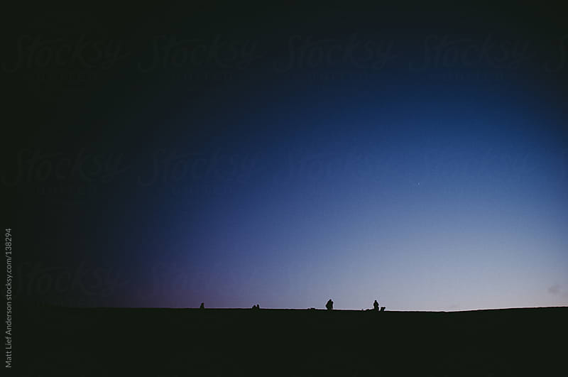 Camels at Dusk by Matt Lief Anderson for Stocksy United