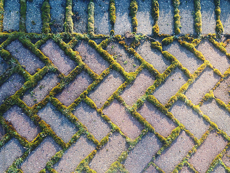 Moss growing between bricks by Helen Rushbrook for Stocksy United