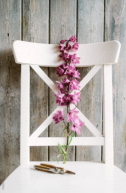 A delphinium bloom and secateurs on a chair. by Helen Rushbrook for Stocksy United