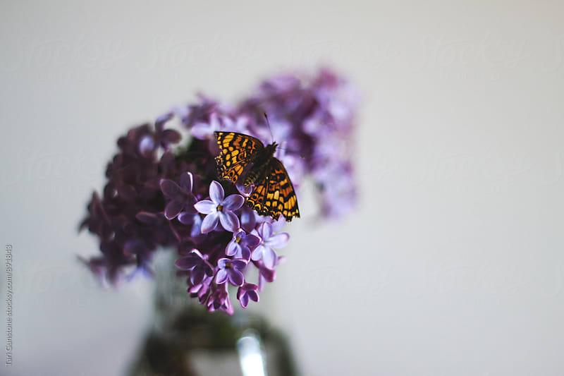 Orange butterfly on purple lilacs by Tari Gunstone for Stocksy United