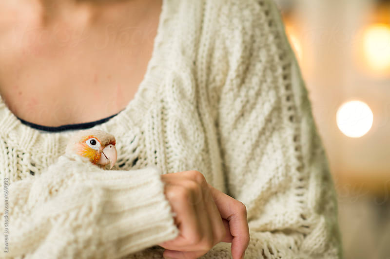 Close Up of Small Pet Parrot in Womans Hand by Lawren Lu for Stocksy United