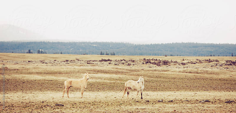 White Wilderness Horses by Kevin Russ for Stocksy United
