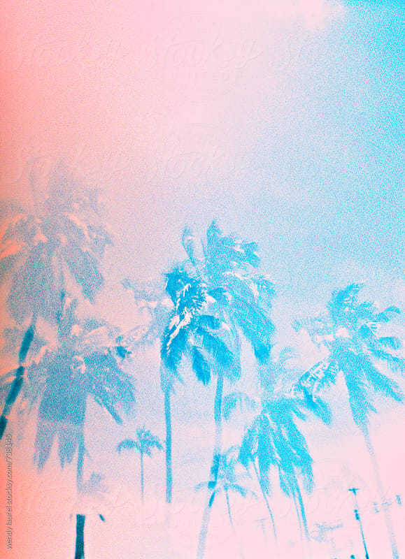 pink and blue palm trees on film by wendy laurel for Stocksy United
