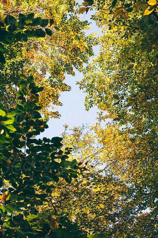 Trees During Autumn by Borislav Zhuykov for Stocksy United