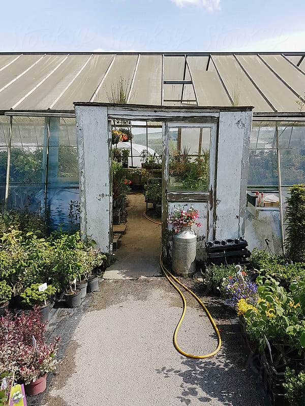 Large greenhouse with plants for sale. Derbyshire, UK. by Liam Grant for Stocksy United