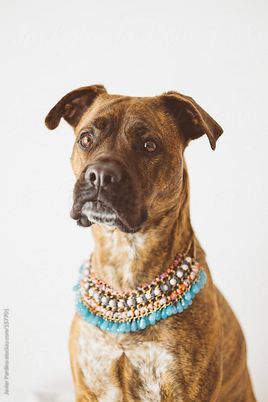 a fashion dog with pendant by Javier Pardina for Stocksy United