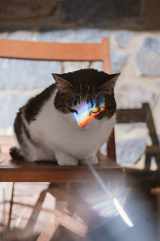 cat with rainbow across her eyes by Thais Ramos Varela for Stocksy United