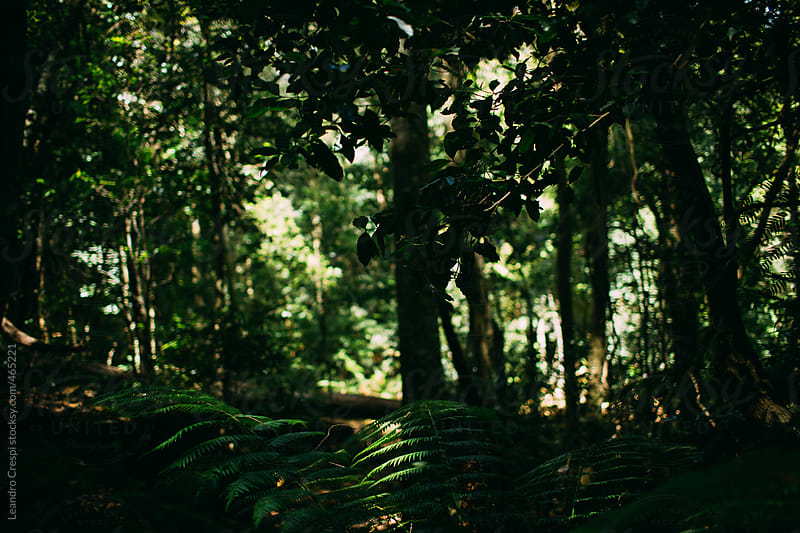 Inside the rainforest, The Blue Mountains by Leandro Crespi for Stocksy United