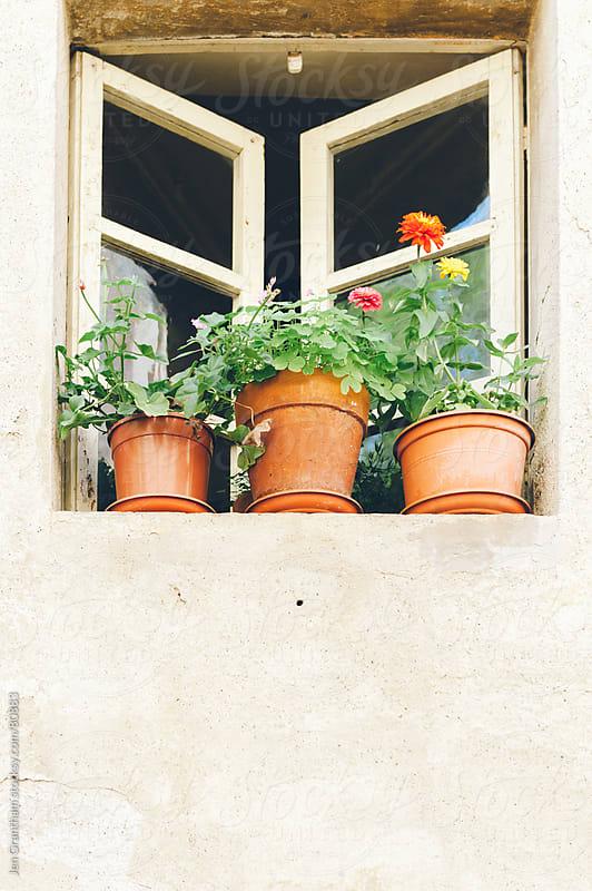 Plants growing in the window by Jen Grantham for Stocksy United