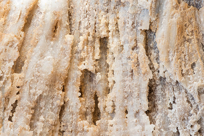 Fossilized coral closeup by Mark Windom for Stocksy United