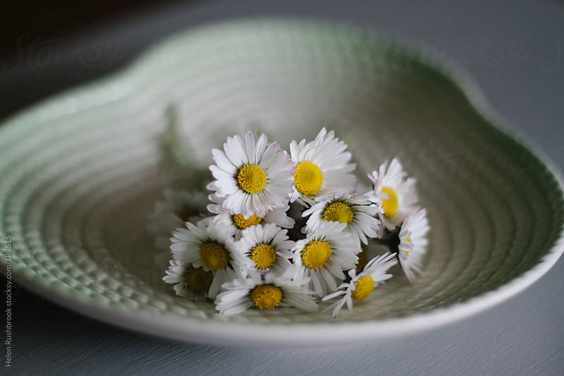 Daisies on a vintage dish by Helen Rushbrook for Stocksy United