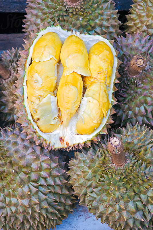 Asia, Malaysia, Durian fruit, contains a bittersweet creamy flesh by Gavin Hellier for Stocksy United